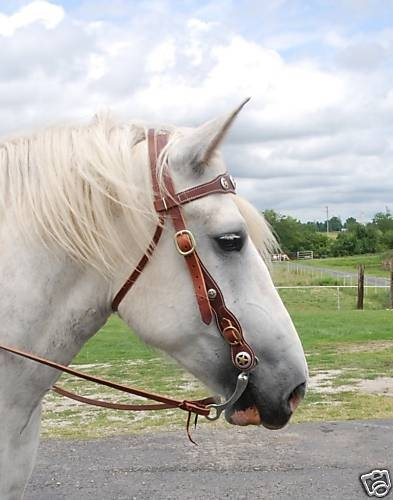 ultimate draft horse bridle