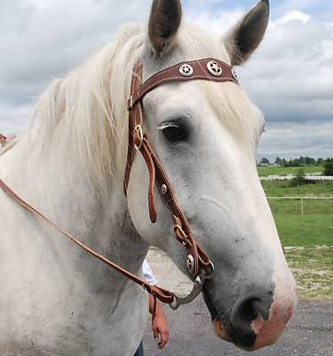 ultimate draft bridle