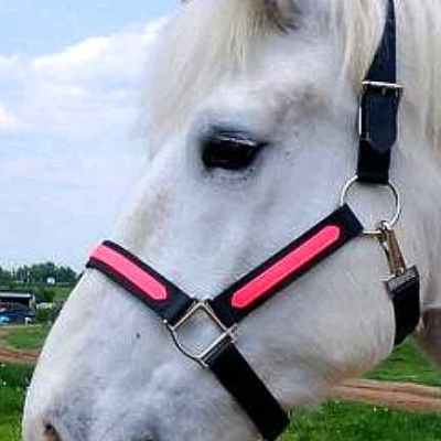 draft beta halter pink overlay