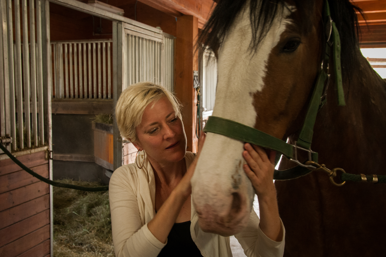 A moment in the barn with a retired Clydesdale horse