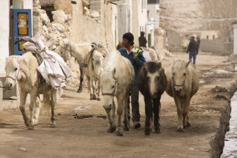 Sharing the road in Lo Manthang with pack horses