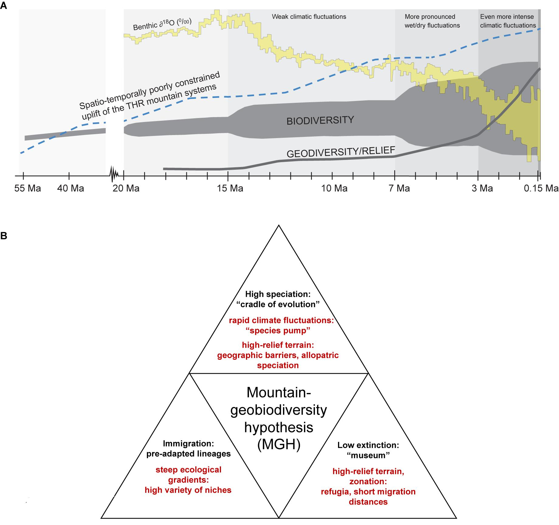 Himalaya Halle Frontiers | Mountains As Evolutionary Arenas: Patterns, Emerging Approaches, Paradigm Shifts, And Their Implications For Plant Phylogeographic Research In The Tibeto-himalayan Region | Plant Science