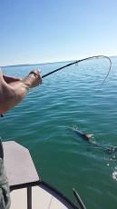Hooking a 120 lb. Tarpon in the Florida Keys