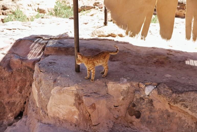 gatti a petra