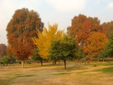 Fall colors at Harwan Park in Srinagar, Kashmir