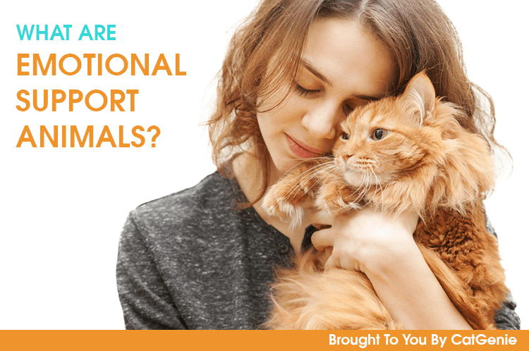 Emotional Support Animals: Why ESA Pets Are Important ...