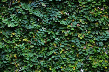 Wall of green