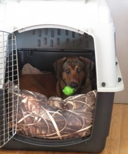 Crate kennel training