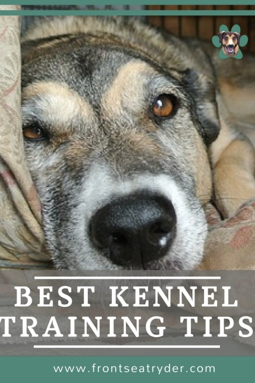 Best Kennel Training Tips