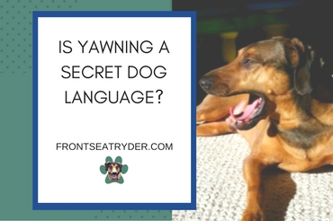 Is Yawning a Secret Dog Language?