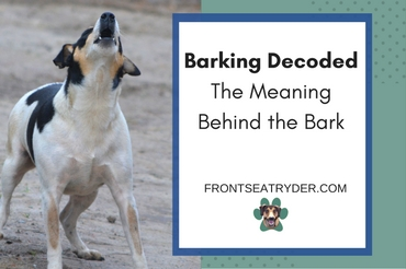 Barking Decoded – The Meaning Behind the Bark