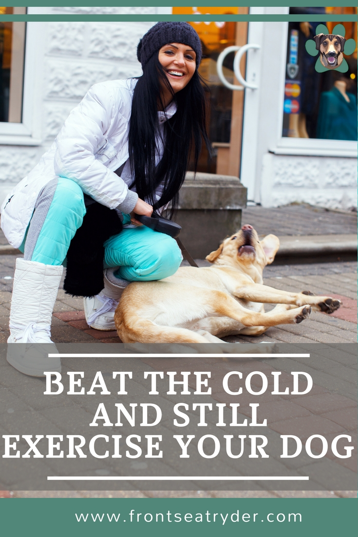 Help keep your pup happy and healthy during the cold months. We have six fun ways to exercise your dog in the Winter. It will do you and your dog good.