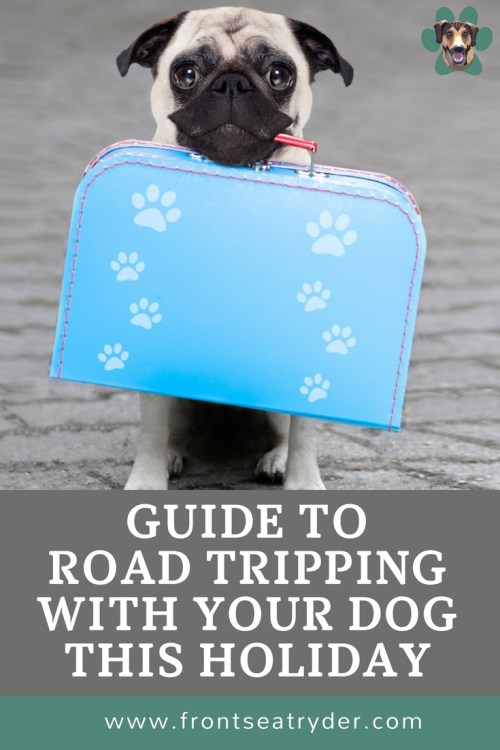Planning a trip this holiday season and taking your dog with you? I have come up with 8 tips for road tripping with your dog.