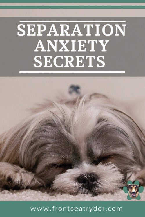 Separation anxiety in dogs is very common. A surprising amount of owners claim they need help with this. Does your dog show signs of separation anxiety?