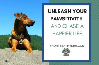 A blog about dogs and mental health. Front Seat Ryder is designed to inspire, encourage and empower you to chase a happy life by improving your mental health with the help of your furry sidekick. Join us as we celebrate life with our four-legged buddies through stories, tips, and community. Unleash your pawsitivity!