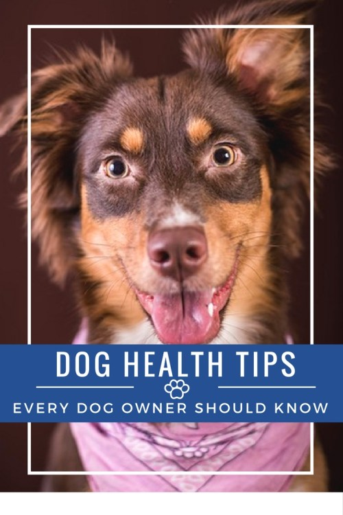 I would like to give a warm welcome to Ryan Ely from www.greatdogsupplies.com! Ryan is an avid Animal Lover who believes in helping animals any way he can. Ryan joins us today to guest post about dog health tips every dog owner should know!