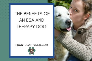 The Benefits of an ESA and Therapy Dog