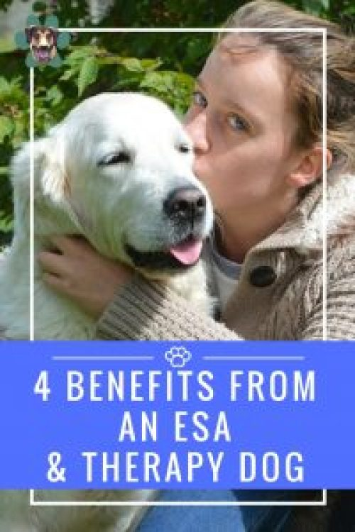 I had that honor of guest posting for Obtaining Bliss. I talked about a few of the benefits of an ESA and therapy dog. As you know, Ryder is my ESA and helps with my depression. Many people are confused about the difference between Service Animals, ESAs, and Therapy animals. I have outlined all of those as well.