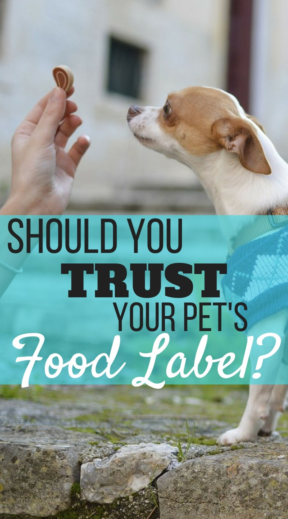 With dog food and treat recalls on the rise, should you trust your pet's food label? What to look out for to keep your pets healthy and happy.
