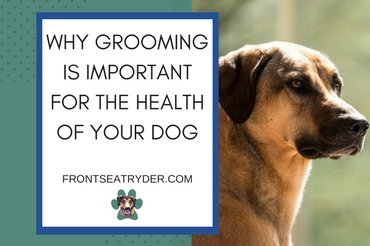 Grooming Is Important for the Health of Your Dog