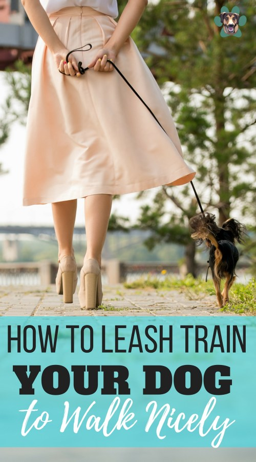 Are you wondering how you can train your dog to walk or heel nicely on a leash by your side? One of the most challenging things dog owners encounter when training their dogs is leash manners despite it being fun and worth all the effort. Here are a few tips on how to train a dog to heel and walk nicely on a leash.