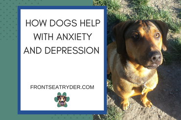 How Dogs Help People Suffering from Anxiety and Depression