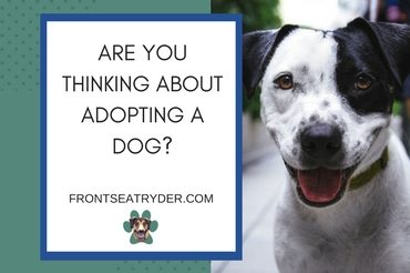 What to Consider When Looking for a Companion Dog