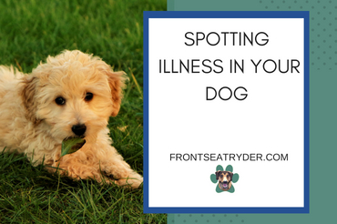 Spotting Illness in Your Dog