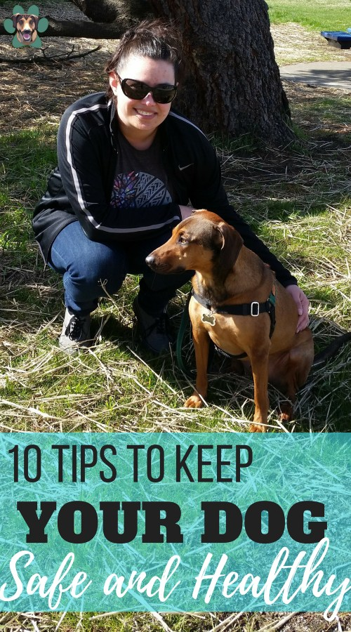 New to the Dog Mom scene? You will soon discover that their happiness and safety become your main priority. Of course, you want your dog to live a happy, healthy, and content life. But, how do you make sure that this is the case? I've got 10 tips to keeping your dog safe and healthy.