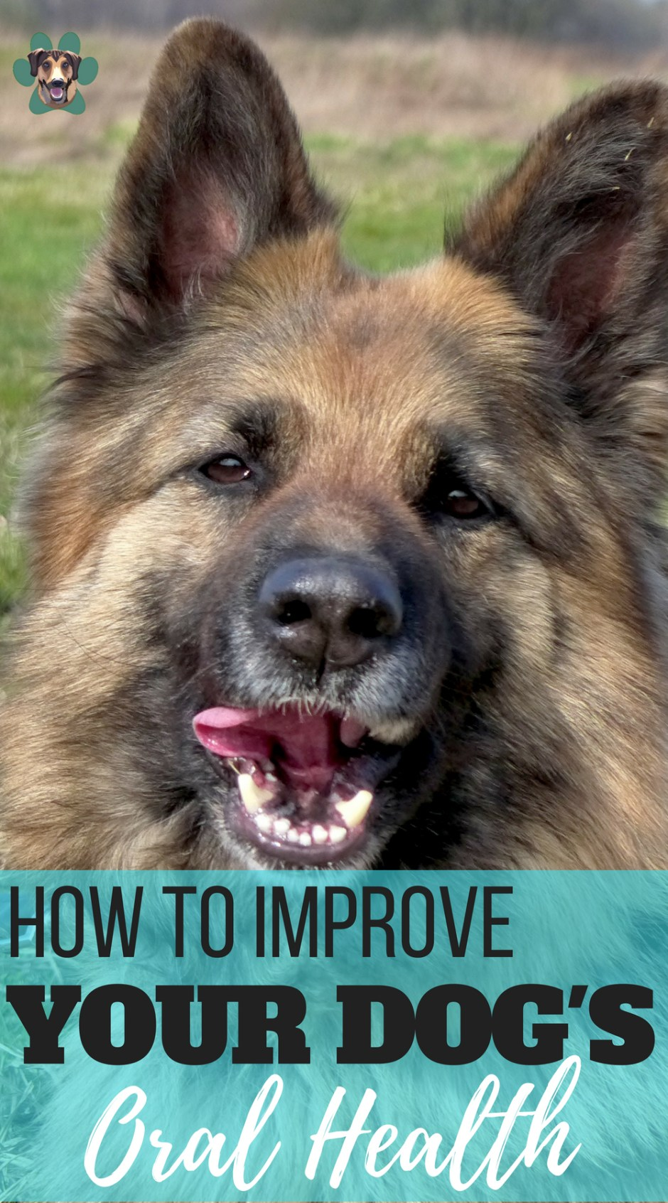 How to Improve Your Dog's Oral Health