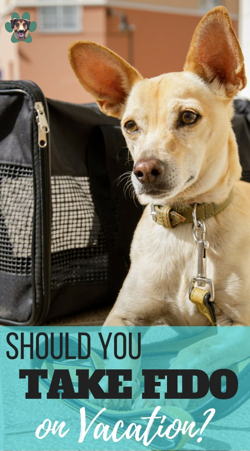 """Summer is fast approaching. Are you planning some awesome Summer getaways? Do you plan on taking your pupper? There is a lot to consider when bringing your dog along for the ride. Before you start packing, here are some answers to the question, """"Is vacationing with my dog a good idea?"""""""