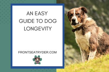 An Easy Guide to Dog Longevity