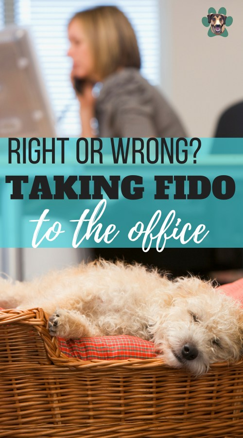 Allowing pets at the office has become a commonly debated topic! Research has shown that pets help to reduce the stress level of employees. Since 2015, offices have started allowing pets at workplaces to verify the experimental results. But should it be allowed? This article compares the positive and negative psychological effects of bringing the pets to the office.