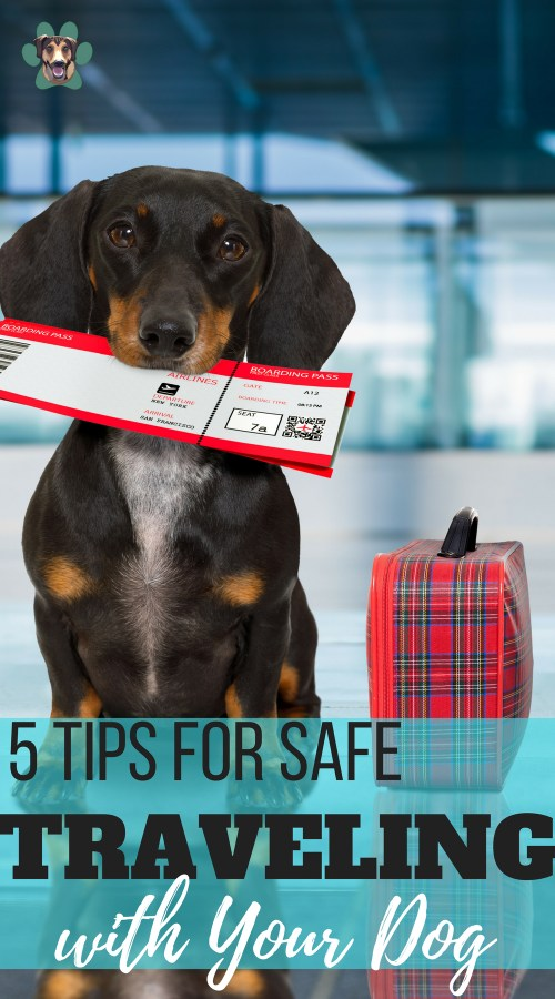 If you're planning a trip and you're feeling guilty about leaving your beloved pooch behind, maybe the right decision is to take your dog with you! Imagine how much extra fun your doggo will add to your vacation! Of course, there will be plenty of respawnsibilities too! If you want to be fully prepared, here are some tips that will make your journey pawsitively awesome!