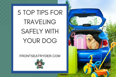 5 Top Tips for Traveling Safely with Your Dog
