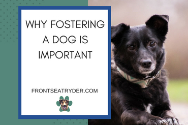 Why Fostering a Dog Is Important