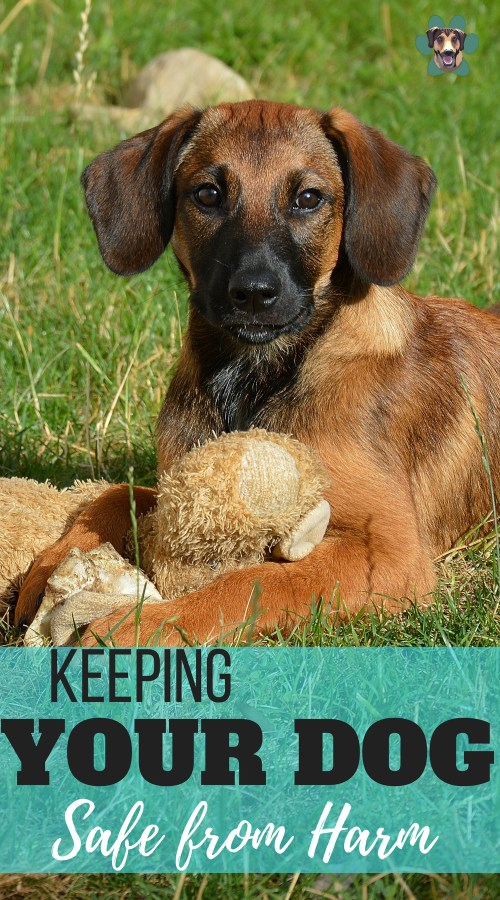 Your dog relays on you to keep them safe from harm. Let's look at some simple ways to keep your dog safe by being responsible.
