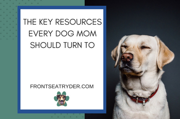 Key Resources Every Dog Mom Should Turn To