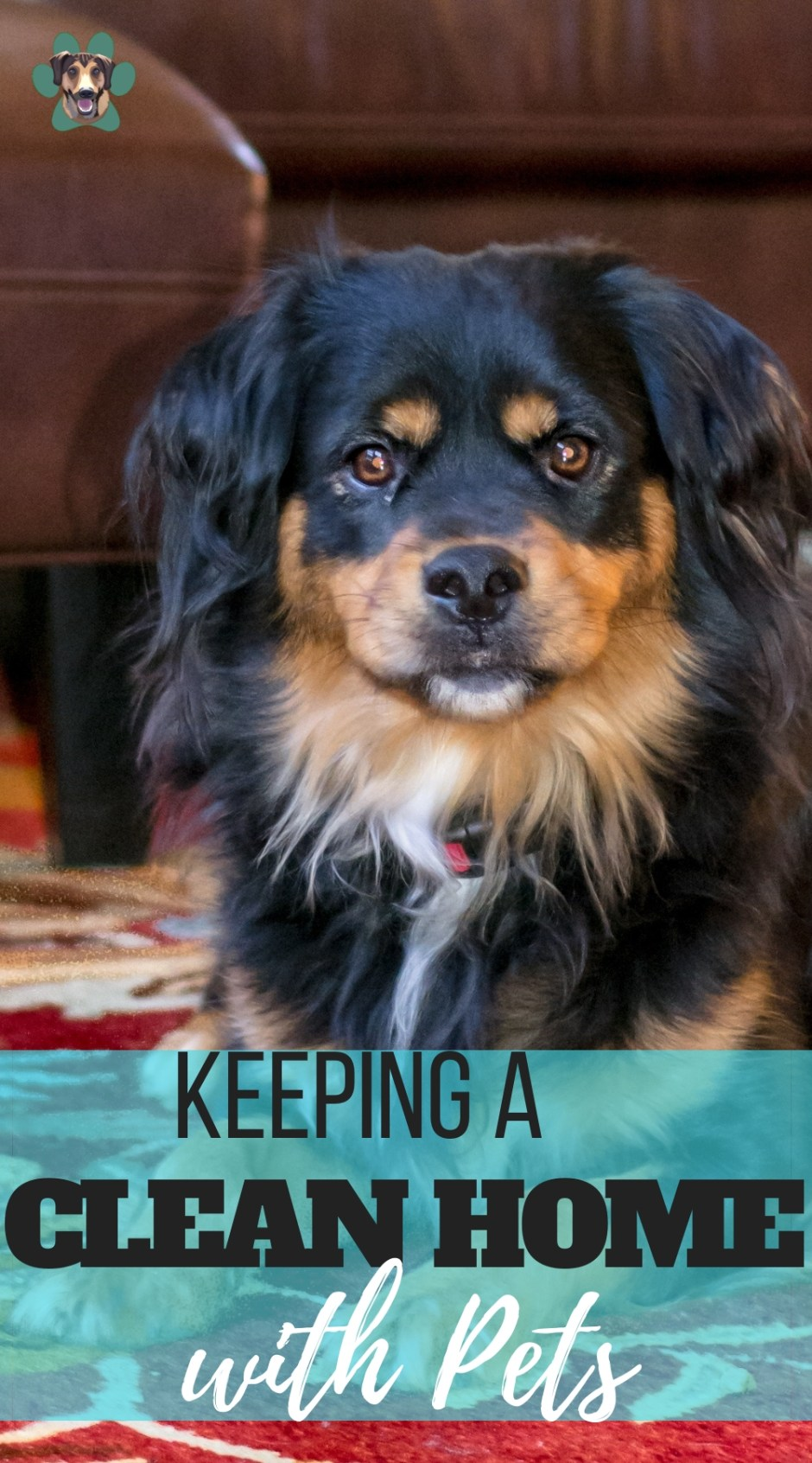 Tips on how to keep a clean pet-friendly home. Have the best of both worlds, odor-free clean living, and furbabies!