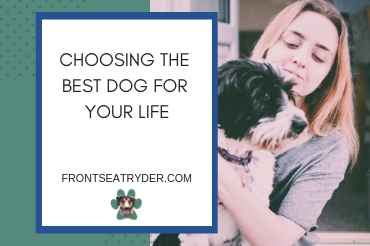 Choosing The Best Dog For Your Life