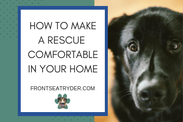How To Make A Rescue Animal Comfortable In Your Home