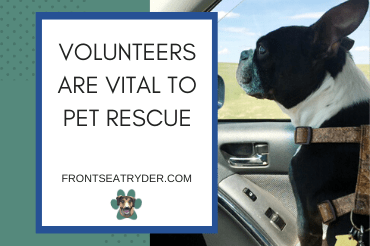 Volunteers Vital to Pet Rescue:  New Novel Highlights Importance of Such Endeavors