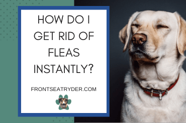 How Do I Get Rid of Fleas Instantly?