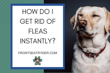 How Do I Get Rid of Fleas Instantly?