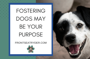 Fostering Dogs May Be The Purpose You've Been Looking For
