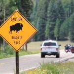 Volunteer Shooters To Help Thin Grand Canyon Bison Herds