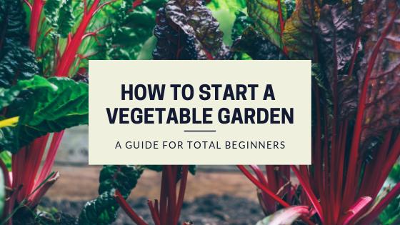 How to Start a Vegetable Garden as a Total Beginner