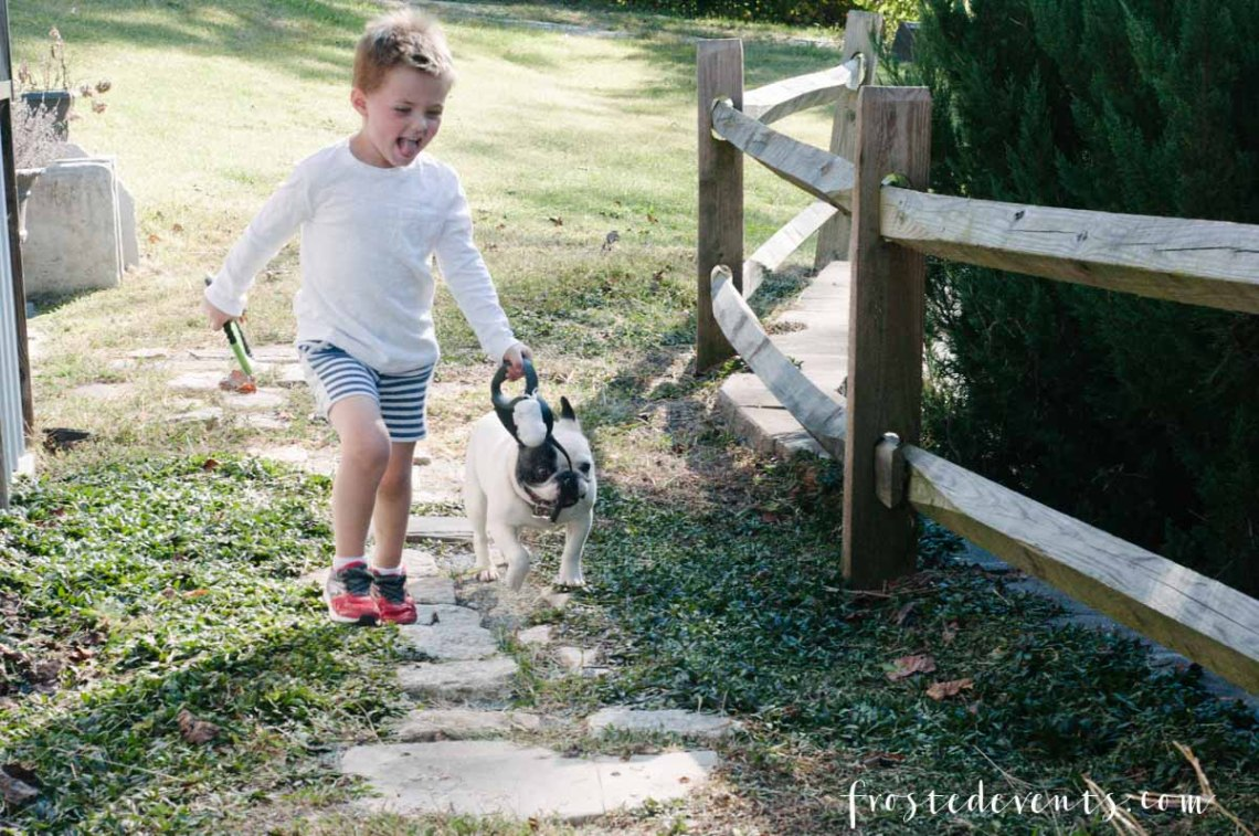Fresh Pet Dog Food for Picky Eaters -- by Misty Nelson, lifestyle blogger and influencer frostedblog @frostedevents
