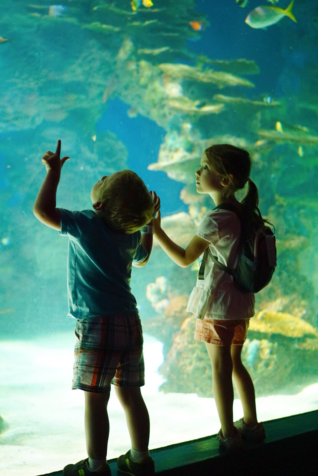 Gatlinburg TN - Visit Tennessee - Ripley's Aquarium of the Smokies- Fun Things to Do in Gatlinburg, TN With Kids - Gatlinburg attractions and family friendly places via Misty Nelson travel blogger, family travel blog @frostedevents