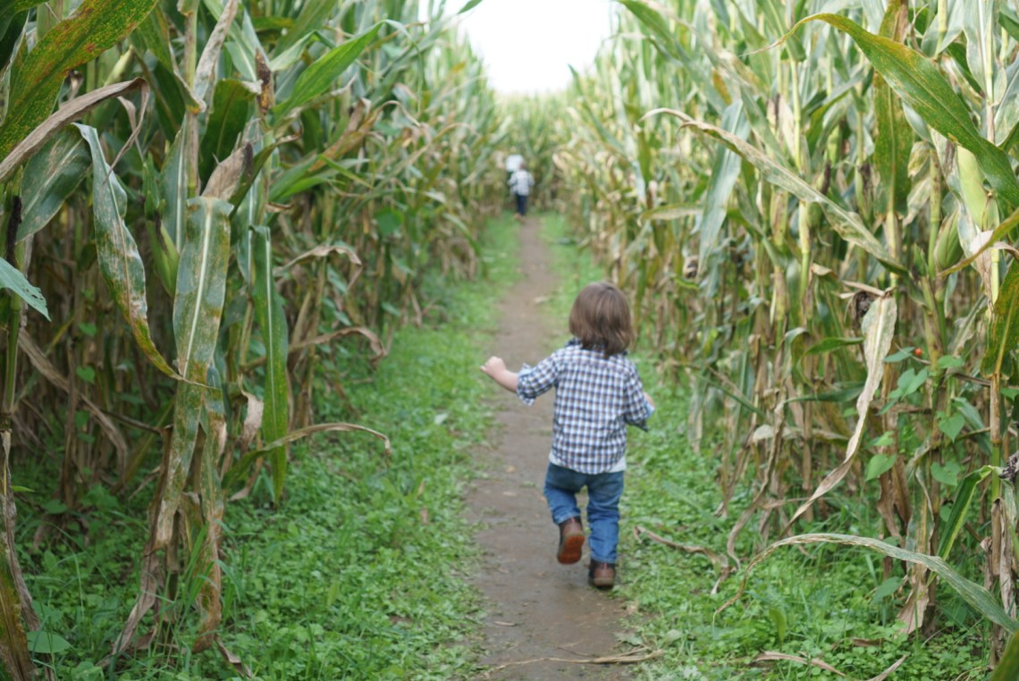 Corn Mazes in NC - Pumpkin Patches and Fall Things to Do - North Carolina - Alpha and Omega